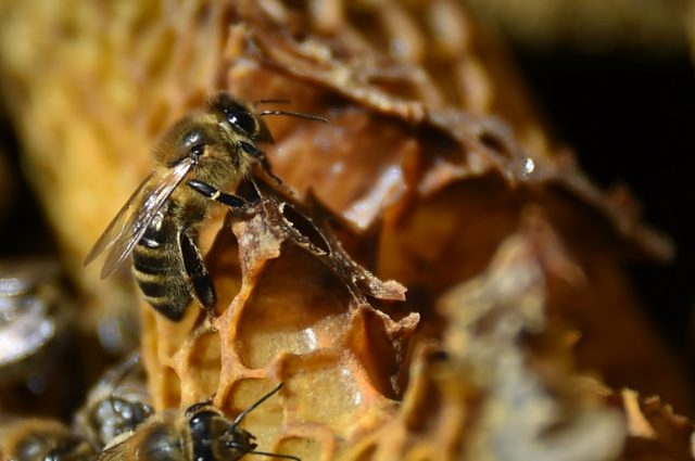 World seeing 'catastrophic collapse' of insects: study