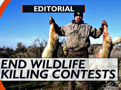 _End Wildlife Killing Contests WISC TV