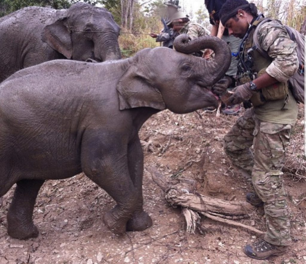 Army Sgt. 1st Class Micah Robertson feeding a baby elephant while training in a foreign country. (Courtesy of Robertson)