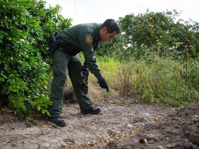 Rio Grande Valley Sector Border Patrol agent searches for tracks of migrants near Texas border. (File Photo: John Moore/Getty Images)