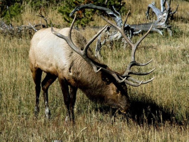 US Supreme Court takes on tribal rights, treaties and elk hunting (AFP/File KAREN BLEIER)