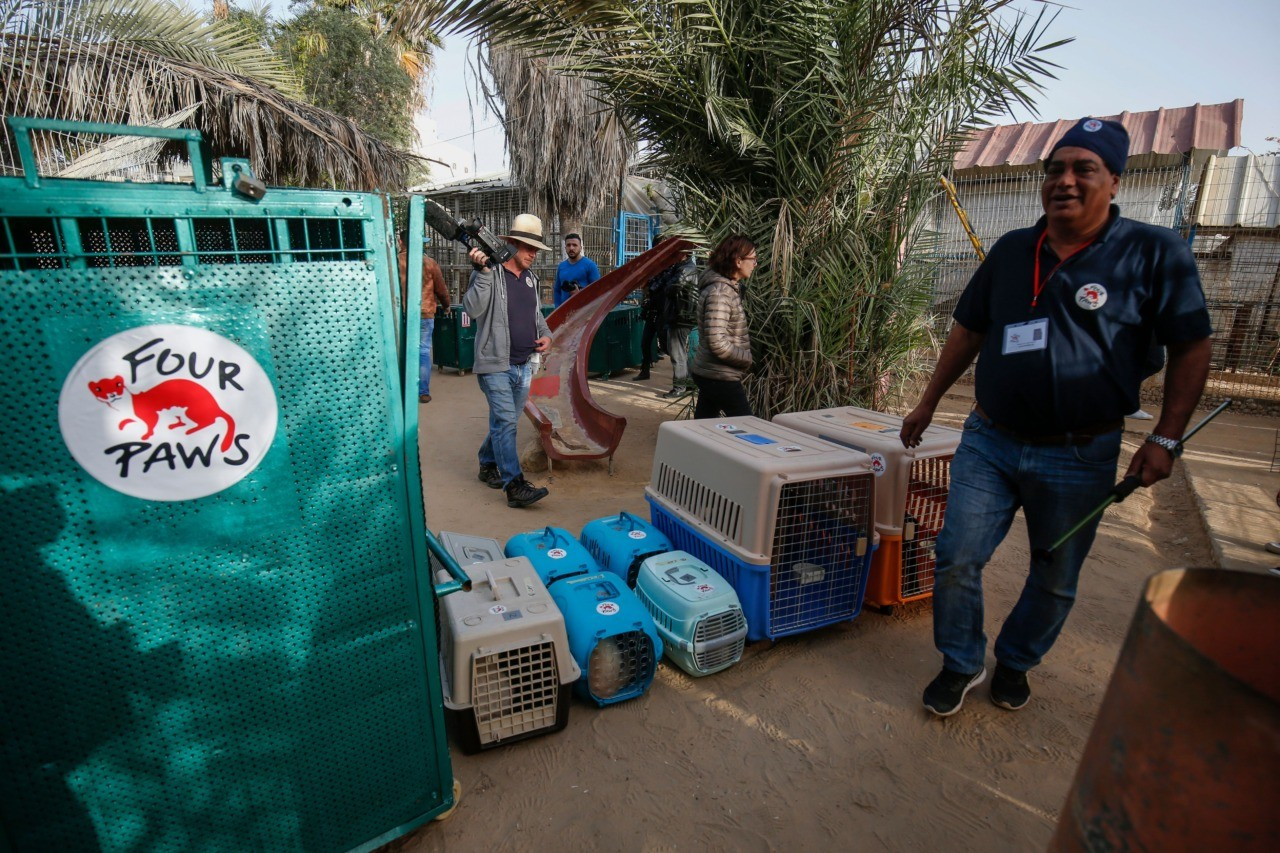 "Amir Khalil, a veterinarian with the international animal welfare charity ""Four Paws"" walks in front of cages containing animals at a zoo in Rafah in the southern Gaza Strip, during the evacuation by the organisation of animals from the Palestinian enclave to relocate to sanctuaries in Jordan, on April 7, 2019. - Forty animals including five lions are to be rescued from squalid conditions in the Gaza Strip, an animal welfare group said. The zoo hit the headlines in February this year when the cash-strapped owner revealed he had declawed one of the lions there, so that customers could pay to play with her. (Photo by SAID KHATIB / AFP) (Photo credit should read SAID KHATIB/AFP/Getty Images)"