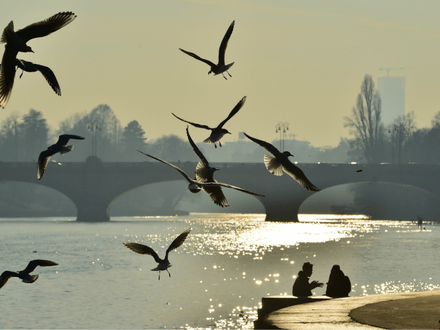 Seagulls fly over the river Po on December 12, 2015 in Turin. AFP PHOTO / GIUSEPPE CACACE / AFP / GIUSEPPE CACACE (Photo credit should read GIUSEPPE CACACE/AFP/Getty Images)