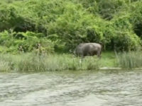 An armed gang of four men ambushed a safari this week and reportedly kidnapped an American tourist--Kimberley Sue Endecott--and her local driver in Uganda's popular Queen Elizabeth National Park that borders the Democratic Republic of Congo (DRC).