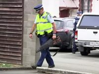 "In this image made from video taken March 19, 2019, a police officer carries a gun voluntarily surrendered by a member of the public into the Masterton police station in Masterton, New Zealand. Prime Minister Jacinda Ardern says New Zealand is immediately banning sales of ""military-style"" semi-automatic and automatic weapons …"