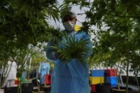 Pioneering Uruguay set to begin exporting medical marijuana