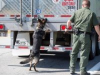 Border Patrol K-9 inspects trailer for drugs or human cargo.