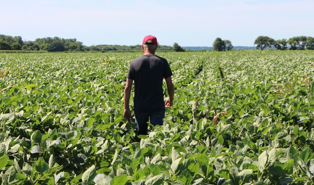 "Farmer Terry Davidson walks through his soy fields July 6, 2018, in Harvard, Illinois, the same day China imposed retaliatory tariffs aimed at the US soybean market. - Davidson, 41, is a fifth generation farmer, a Democrat among mostly Republicans. He expects to be farming long after the US-China trade tariffs become a distant memory. ""We've survived since the 1800s and we're still going. So, I think we'll keep going,"" Davidson says. (Photo by Nova SAFO / AFP) (Photo credit should read NOVA SAFO/AFP/Getty Images)"