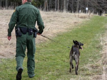 Border Patrol K-9 team searches woods in Vermont for migrants who illegally crossed the Canadian border. (Photo: U.S. Border Patrol/Swanton Sector)
