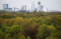 Sleepless in Berlin: Nightingales flock to scruffy city parks