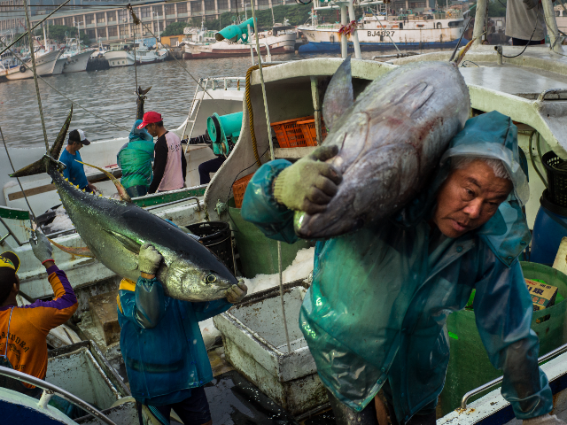 Workers unload fish from the boat before transporting to a fish market on May 18, 2016 in Pingtung, Taiwan. Taiwan, often an overlooked player in the control over the South China Sea, continues assert its claim to sovereignty over Itu Aba, also known as Taiping Island in Taiwan, as well …