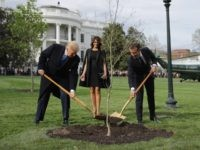 WASHINGTON, DC - APRIL 23: U.S. President Donald Trump, U.S. first lady Melania Trump, and French President Emmanuel Macron participate in a tree-planting ceremony on the South Lawn of the White House April 23, 2018 in Washington, DC. The European Sessile Oak is a gift from the Macrons and comes …