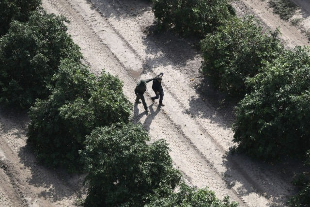 MCALLEN, TX - NOVEMBER 06: A U.S. Border Patrol agent detains an undocumented immigrant in an orange grove on November 6, 2018 in McAllen, Texas. Border Patrol agents on the ground, assisted by a helicopter unit of U.S. Air and Marine Operations agents, detained a group of immigrants who had …
