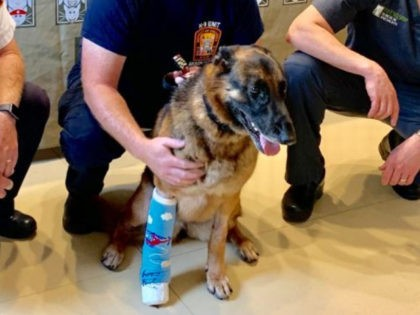 D.C. Fire and EMS Dog Recovering After Severe Injury During Search