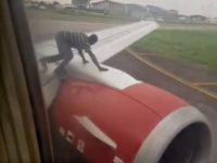 WATCH: Man Leaps onto Plane's Wing as It Tries to Take Off