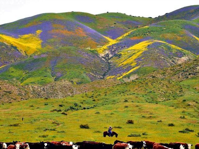 Western Ranch Land
