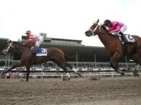 Animal Rights Groups Sound Alarm After 10 Race Horses Die in 9 Days at New York Tracks