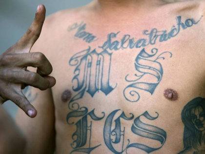 "San Salvador, EL SALVADOR: A member of the ""Mara Salvatrucha"" gang flashes the sign of his gang as he is presented to the press in San Salvador on September 7th, 2006, after his arrest last night. Some 130 gang members suspected of committing homicides were arrested last night during a …"