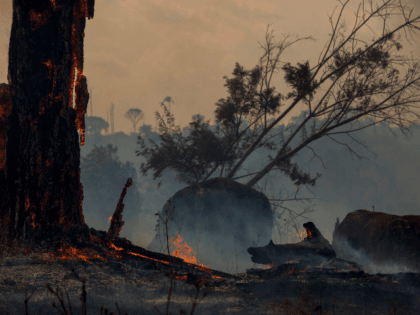 View of a burnt area of forest in Altamira, Para state, Brazil, in the Amazon basin, on August 27, 2019. - Brazil will accept foreign aid to help fight fires in the Amazon rainforest on the condition the Latin American country controls the money, the president's spokesman said Tuesday. (Photo …