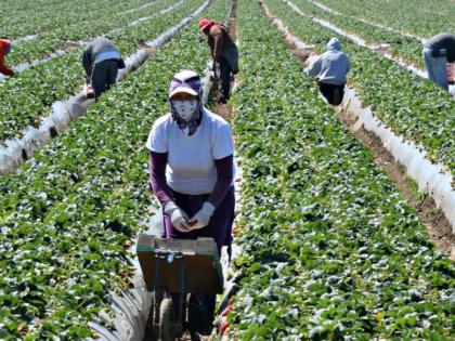 Guatemalan Farm Workers