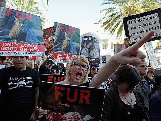 BEVERLY HILLS, CA - NOVEMBER 25: Animal rights groups and PETA stop in front of a Max Mara store on Rodeo Drive during an anti-fur demonstration urging Black Friday shoppers to stop buying fur-related products on November 25, 2011 in Beverly Hills, California. Neighboring city West Hollywood unanimously approved an …