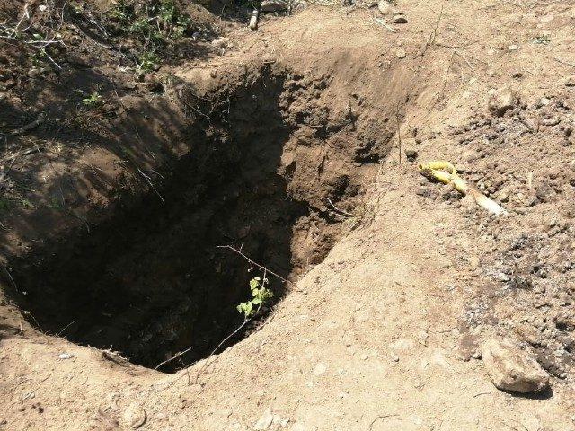 Cartel grave