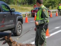 Swanton Sector Border Patrol officials nab 24 migrants and a wanted felon during operations at and around an immigration interior checkpoint. (Photo: U.S. Border Patrol/Swanton Sector)