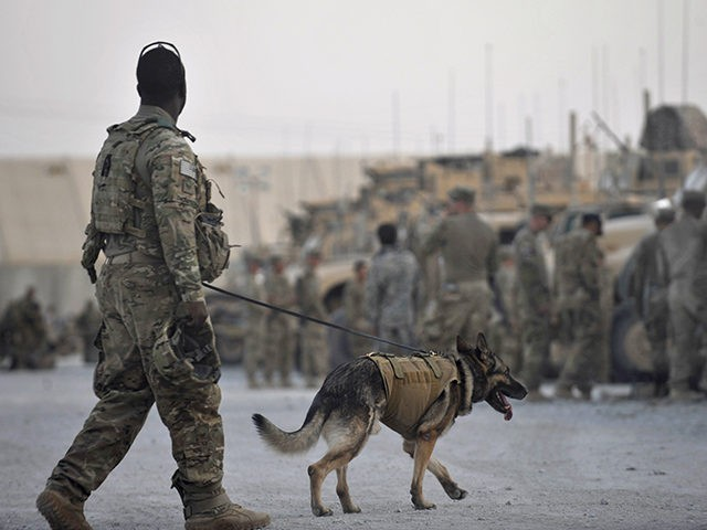 This photo taken on August 14, 2011 shows US Army Staff Sergeant Lindsey Thompson of US Forces Afghanistan K-9 unit and Mayo, a German Shepherd, preparing to board a convoy of armored vehicles with troops from Bravo and Delta Company, 2-87 Infantry Battalion, 3rd Combat Brigade Team at the Forward …