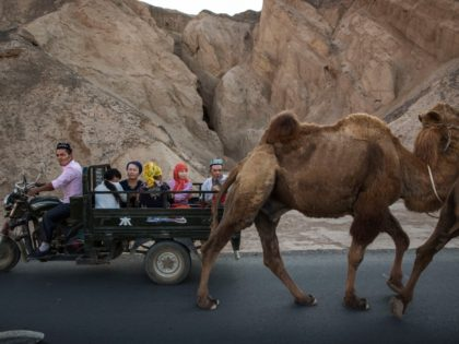 TURPAN, CHINA - SEPTEMBER 12: (CHINA OUT) A Uyghur family ride passed a camel on a road during the Corban Festival on September 12, 2016 in Turpan County, in the far western Xinjiang province, China. The Corban festival, known to Muslims worldwide as Eid al-Adha or 'feast of the sacrifice', …