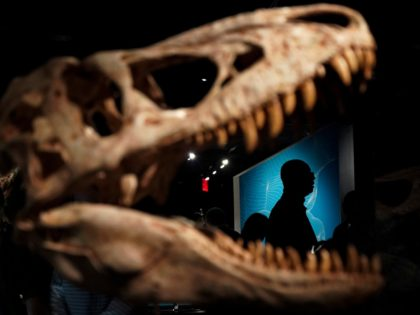 NEW YORK, NY - MARCH 04: Guests make their way through a new exhibit called 'T. Rex: The Ultimate Predator' during a press preview at the American Museum of Natural History, March 4, 2019 in New York City. The new exhibit will open to the public on March 11. (Photo …