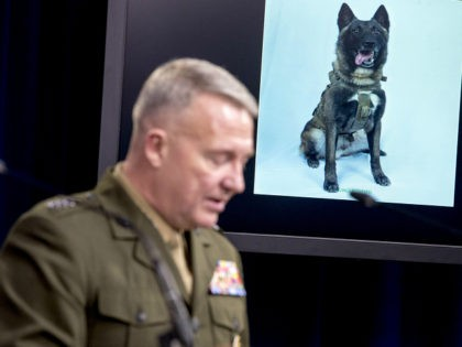 A working military dog is displayed on a monitor as U.S. Central Command Commander Marine Gen. Kenneth McKenzie speaks at a joint press briefing at the Pentagon in Washington, Wednesday, Oct. 30, 2019, on the Abu Bakr al-Baghdadi raid. (AP Photo/Andrew Harnik)