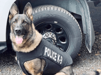 Check out how official this good boy looks in his ballistic vest! Although legally K9s are not required to wear vests, APD wants to ensure that our police K9s are safe and protected from harm. Ballistic vests protect a K9's vital organs from projectiles and edged weapons, ensuring the pup …
