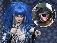 (INSET: 'Conan' the military combat dog) Photo by: KGC-138/STAR MAX/IPx 2019 10/20/19 Cher performs at O2 Arena in London, England.