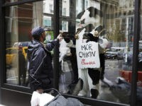 People look at a costumed Chick-fil-A cow in the window of a new Chick-fil-A restaurant, Thursday, Oct. 1, 2015 in New York. The Atlanta-based privately held franchise company has more than 1900 restaurants in 41 states and Washington, D.C. The New York franchise, located a few blocks from Times Square, …