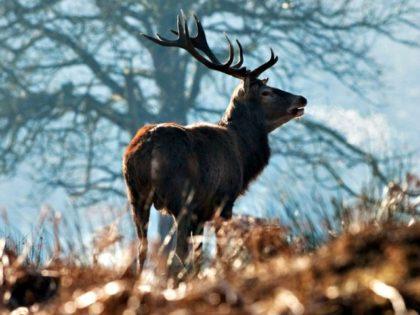 Buttigieg goes deer hunting