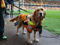 WOLVERHAMPTON, ENGLAND - APRIL 15: A guide dog is seen wearing Wolverhampton Wanderers merchandise prior to the Sky Bet Championship match between Wolverhampton Wanderers and Birmingham City at Molineux on April 15, 2018 in Wolverhampton, England. (Photo by Catherine Ivill/Getty Images)
