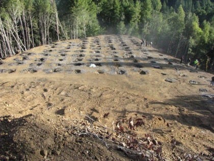 In this undated photo provided by the California Department of Fish and Wildlife, are the remains of a marijuana farm on private land in the Eel River watershed near Willits, Calif. However many of California's pot growers come off the black market when recreational marijuana becomes legal here next month, …