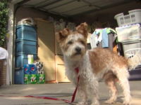 VIDEO: Marine Veteran Helps Reunite Family with Stolen Dog