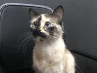 Hero cat Gatubela
