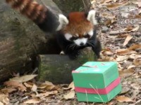 animals receive gifts