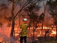 This photo taken on December 7, 2019 shows a firefighter conducting back burning measures to secure residential areas from encroaching bushfires at the Mangrove area, some 90-110 kilometres north of Sydney. - Bushfires are common in the country but scientists say this year's season has come earlier and with more …