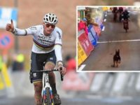 A Belgian cycling race was pushed into chaos Sunday when a loose dog ran out onto the course and chased competitors, with commentators at one stage awarding the canine runaway provisional third place in the crowded field.