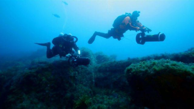 In the Atlantic's far south, cameras reveal biodiversity gem