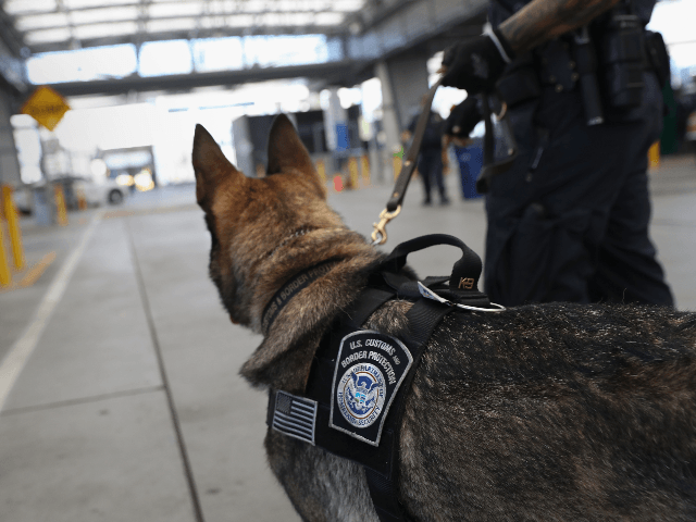 A U.S. Customs and Border Protection K-9 unit waits to check vehicles crossing into the United States from Mexico on September 23, 2016 in San Ysidro, California. Daily more than 10,000 people legally cross the border, mostly for work, at San Ysidro, making it the busiest port of entry on …