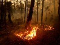 Small spot fires still burn on January 05, 2020 between Orbost and Cann River along the Princes Highway, Australia. Two people are dead and 6 remain unaccounted for as bushfires continue to burn across the East Gippsland area. Victorian premier Daniel Andrews has declared a state of disaster in the …
