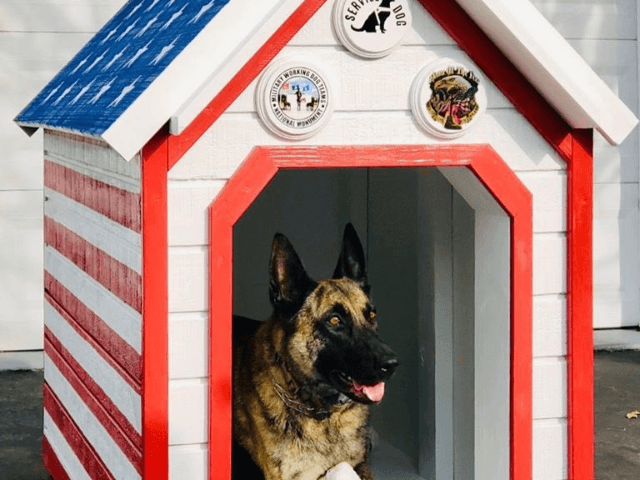 Hackettstown police announced Friday that Patrolman Chris Laver, who served in the Iraq war and had a K9 partner named Jada on the police force, was the surprise recipient of the red, white, and blue painted dog house, Lehigh Valley Live reported.