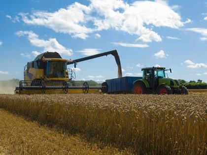 Thresher harvesting wheat.