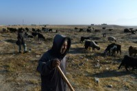 Afghan drought forces shepherds into desperate measures