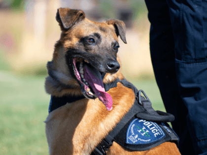 Police Dog Killed in Action Buried in Special Portrait Casket