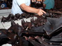 This photo taken on February 8, 2020 shows a vendor selling bats at the Tomohon Extreme Meat market on Sulawesi island, as business is booming and curious tourists keep arriving to check out exotic fare that enrages animal rights activists. - Bats, rats and snakes are still being sold at …